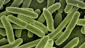 koli-bacteria_448